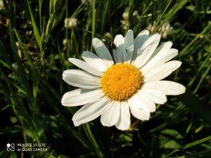 makro květina