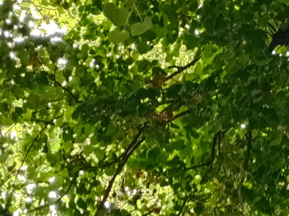 Pohled na vyfocené listy stromů nás skutečně nepotěšil